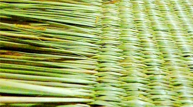 Seagrass Potential As A Handicraft Raw Material Hxcoexp Com